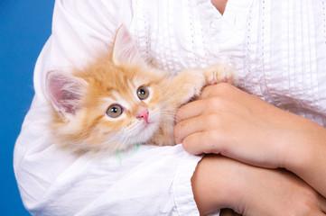 Katzenbaby liegt im Arm