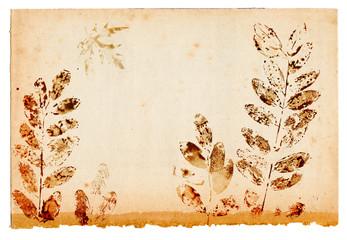 Leaf shapes on old paper sheet