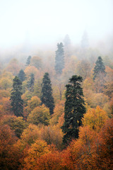 mysterious landscape: forest clearing in misty morning