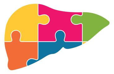 Human Liver Jigsaw Puzzle Pieces Abstract Vector