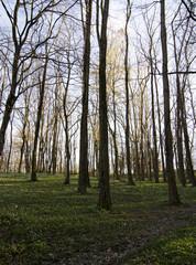 spring landscape backlight