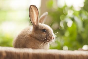 Little cute baby bunny 07