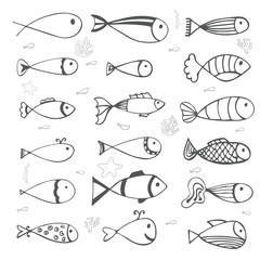 Fish collection on white background. Hand drawn style
