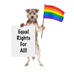 Dog Supporting Gay Rights With LGBT Rainbow Flag