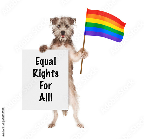 Foto op Canvas Dragen Dog Supporting Gay Rights With LGBT Rainbow Flag
