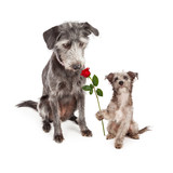 Puppy Handing Flower to Mother Dog