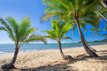 Palm trees at tropical Palm Cove beach in north Queensland