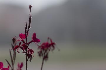 Mevsim Bahar ve Çiçekler Yağmur Damlası Altında
