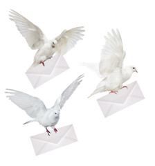 isolated three doves carrying white envelope