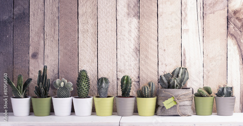 Cactus and succulents collection in small flowerpots - 80956560