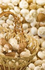 image of many mushrooms