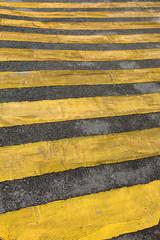 zebra bande jaune