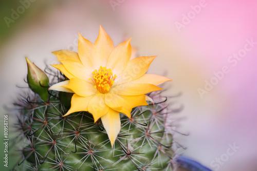 Canvas Cactus Focus on stamens Cactus Flower