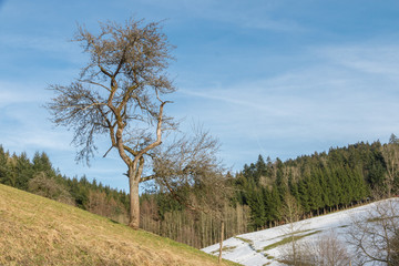 The edge of the Black Forest