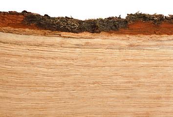 Oak firewood background
