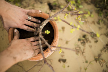preparation and transplanting plants
