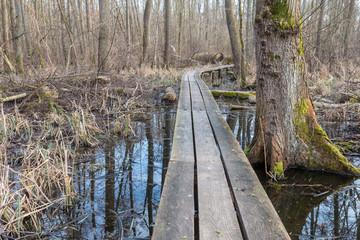 Wooden planks through the bog