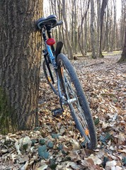 Bicycle in spring forest