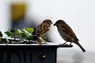 Two little bird