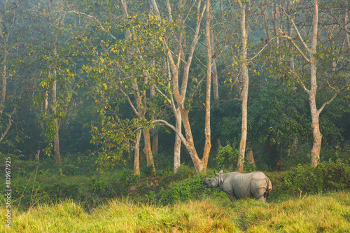 Rhinoceros in the jungle, Chitwan National Park Nepal