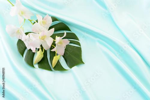 モンステラの葉とランの花