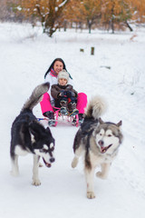 Riding on malamutes
