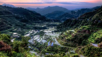 Ifugao Rice Fields