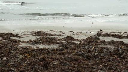 浜辺に揚げられた海藻