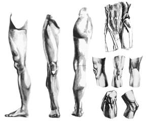 Leg, knee, abdomen muscles
