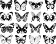 butterflies silhouettes - 80981501