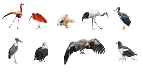 Set of 9  photographs of birds isolated on white background