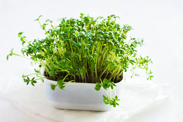 Fresh cress on white background
