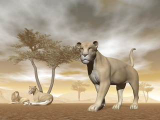 Lions in the savannah - 3D render