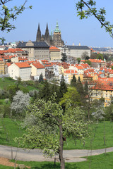 View on the spring Prague with gothic Castle