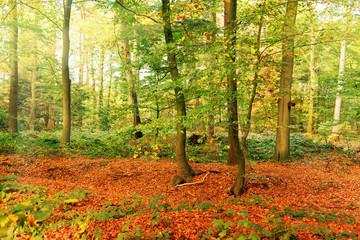 Herbst in Niedersachsen