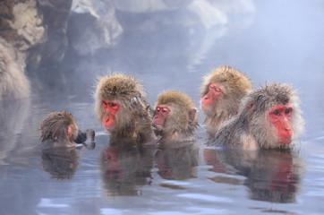 温泉に入るニホンザルの家族