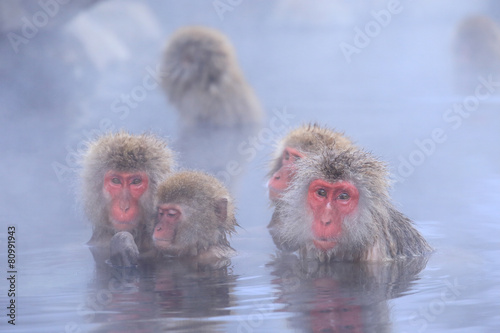 Foto op Canvas Aap 温泉に入るニホンザルの家族