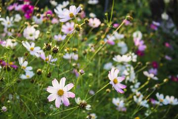 colored flowers in green summer garden