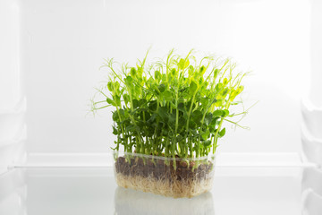 Fresh green raw sprouts in fridge