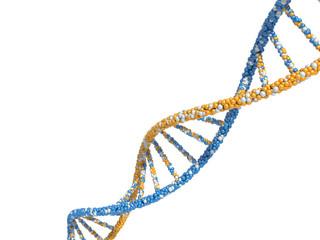 DNA molecules. 3d render on white background