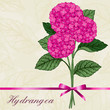 Bouquet of pink hydrangeas.