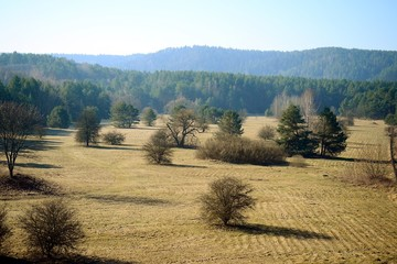 Spring landscape with trees on the field