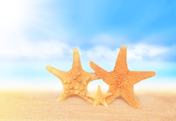Summer beach. Family of Starfish on the seashore.