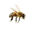 Leinwandbild Motiv Bee