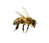Bee - 81020552