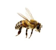 "Постер, картина, фотообои ""Bee"""