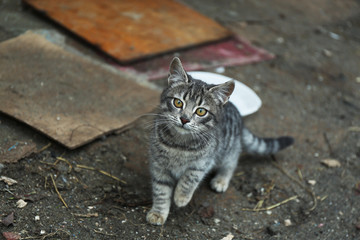 Homeless cat outdoors