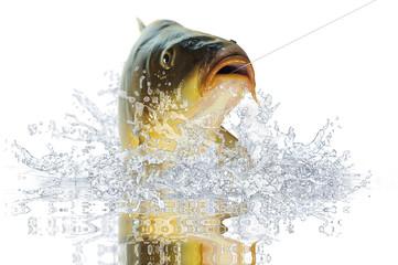 Fische 98