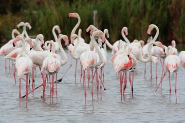 uccello acquatico fenicottero rosa