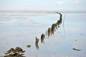 panorama empty coastline with fishers poles and birds